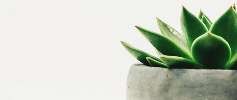 effets des plantes sur la qualité de l'air