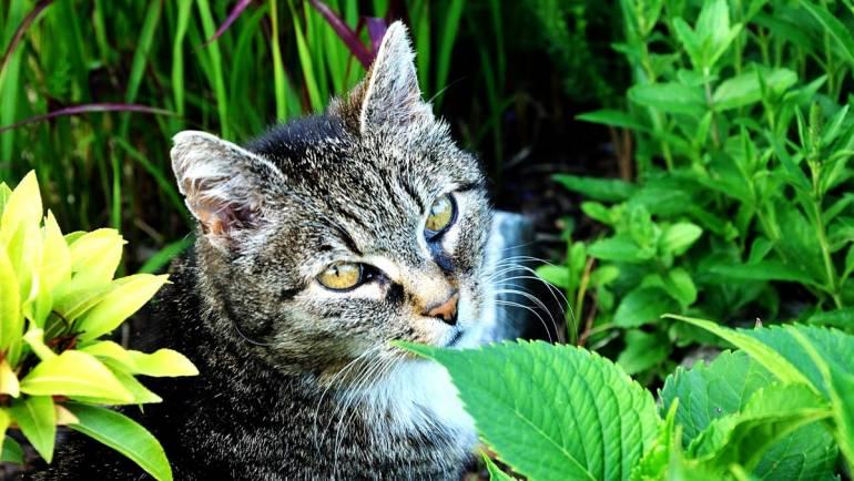 6 bienfaits de la griffe de chat, cette plante étonnante !