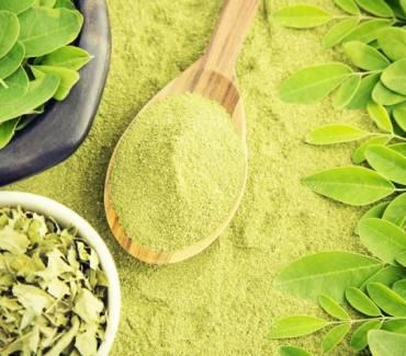 Le moringa, un puissant revitalisant pour l'organisme