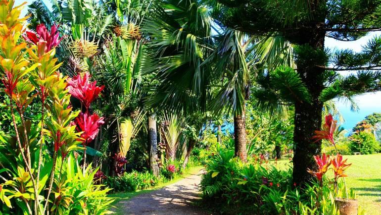 Débroussaillage et entretien du jardin : des obligations légales à appliquer