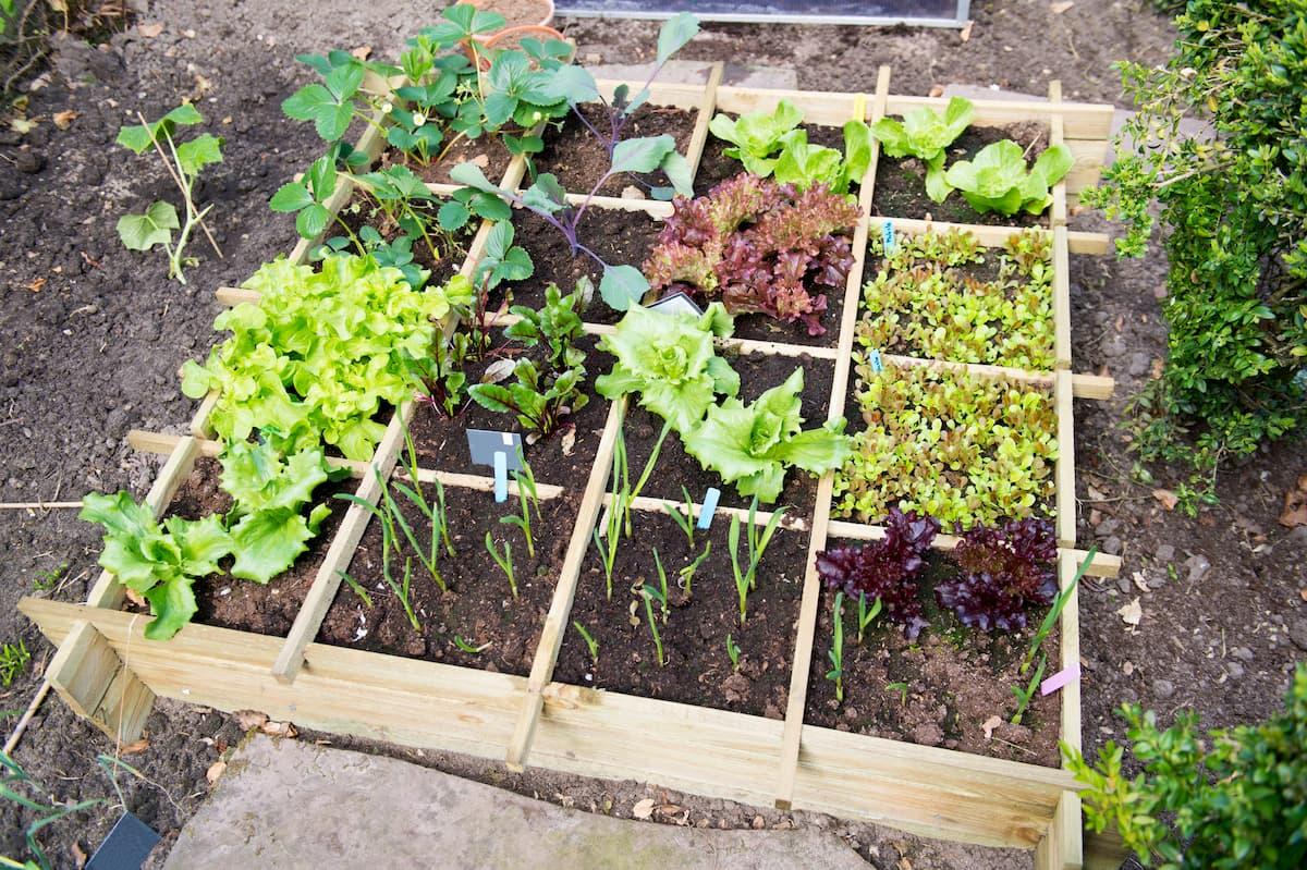 potager de jardin