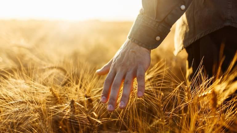 5 bonnes raisons de se tourner vers l'agriculture biologique