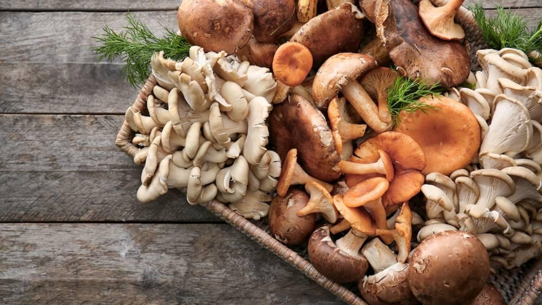 5 champignons bons pour la santé à consommer dès maintenant !