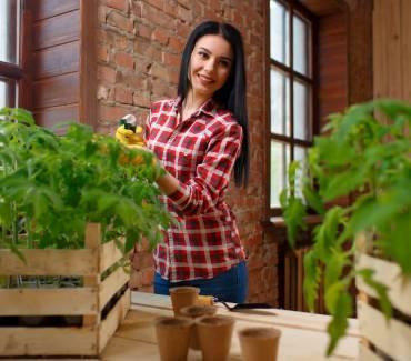 La culture d'intérieur, le nouveau moyen de cultiver facilement des fruits et légumes bio tout au long de l'année