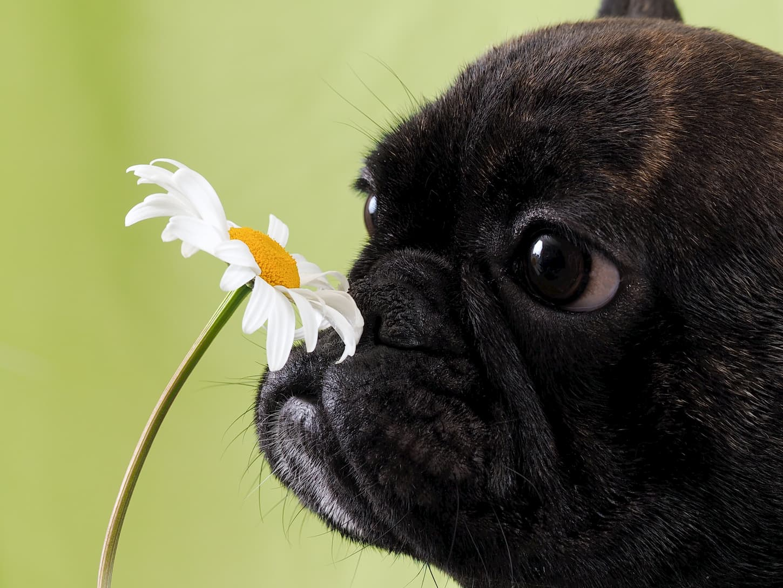 plantes chien