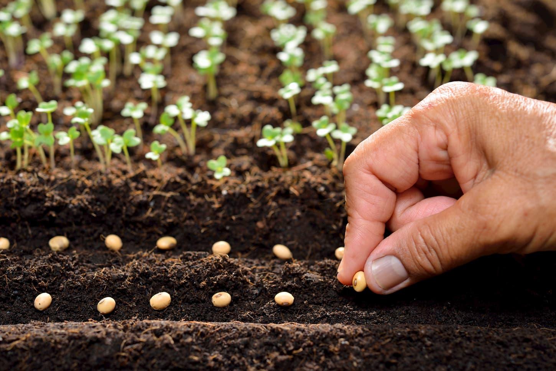 semences bio