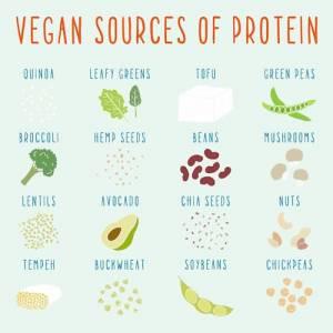 meilleure protéine végétale en poudre