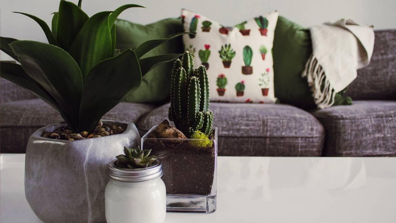 Les meilleures plantes d'intérieur, pièce par pièce !