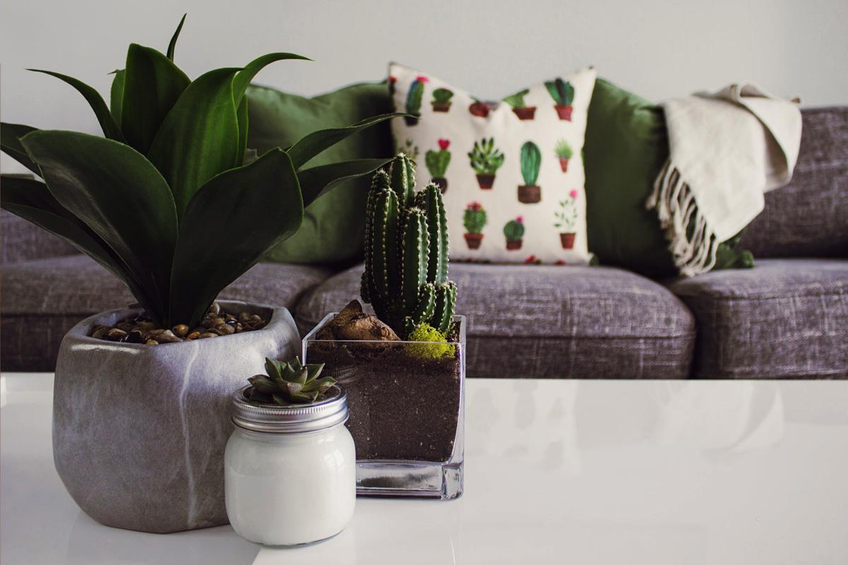 Etagere Pour Plantes Interieures les meilleures plantes d'intérieur, pièce par pièce