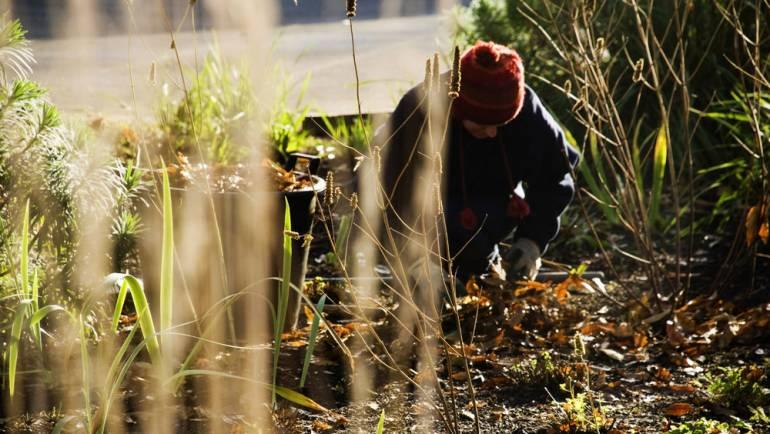 3 équipements (quasi) obligatoires pour jardiner en hiver