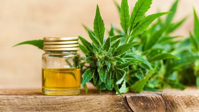 L'huile de CBD : Propriétés, bienfaits et dangers