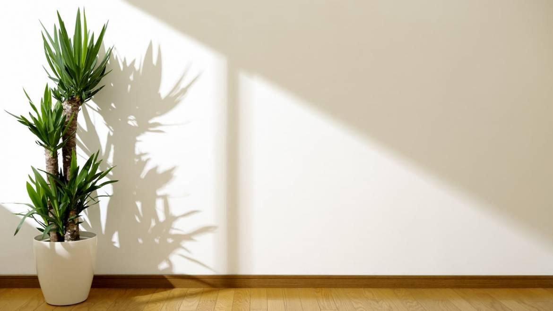Yucca d'extérieur, entretien et questions fréquentes