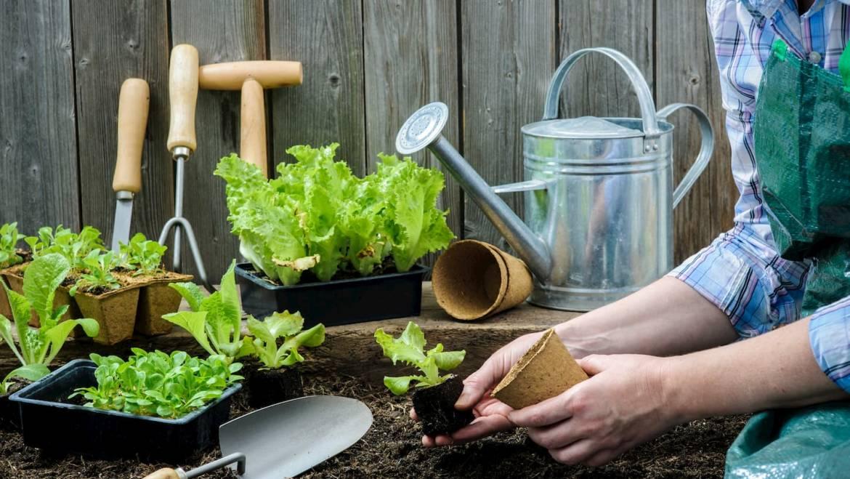 Outils de jardin, comment bien les choisir et les entretenir ?