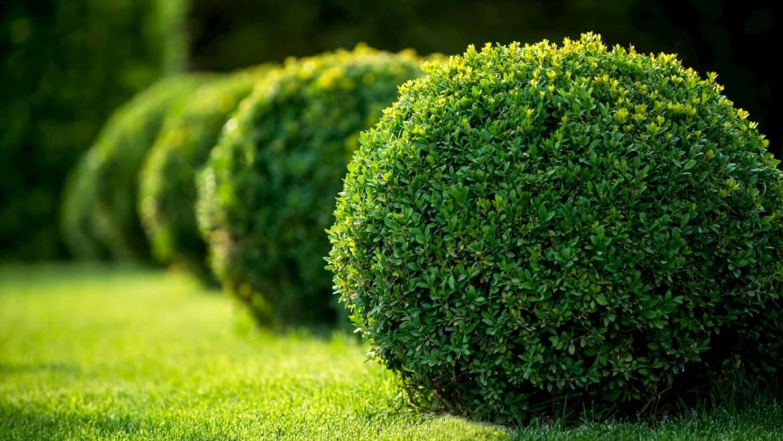 Quels arbustes pour votre jardin ?