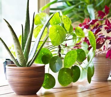 10 astuces de pro pour bien entretenir ses plantes vertes d'intérieur