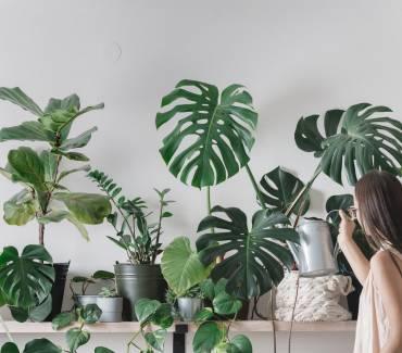 Tous les avantages des plantes dans votre maison en un coup d'œil