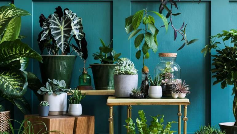 Plantes faciles à faire pousser: lesquelles choisir?
