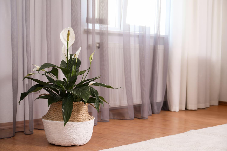 plantes intérieur faciles
