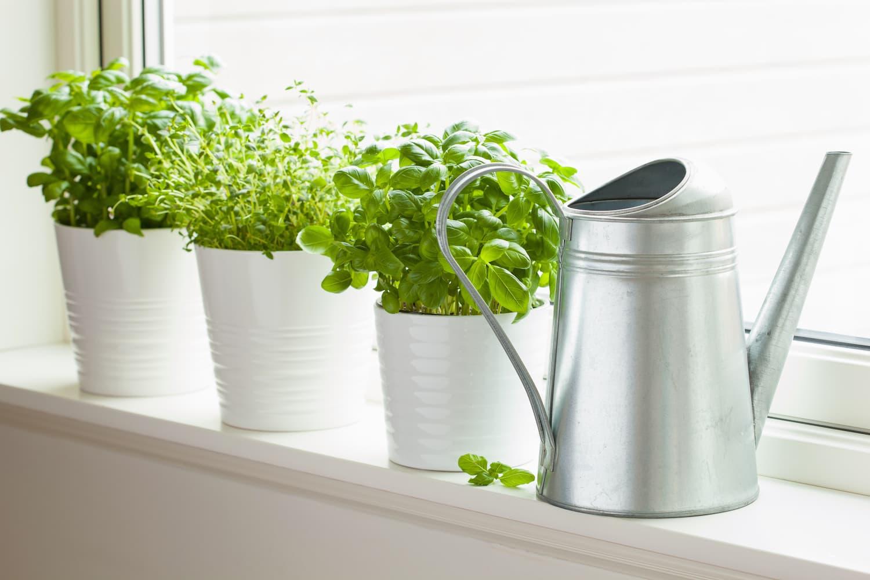 plantes faciles à faire pousser